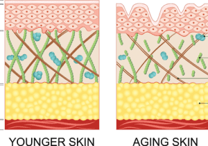 What is collagen and how does it affect ageing?